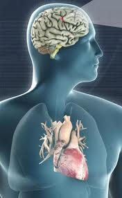 We have two brains: heart and mind